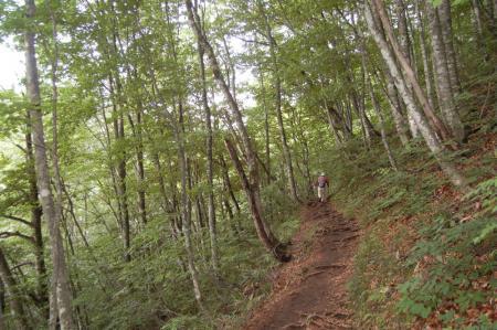 雄子沢沿いの山道