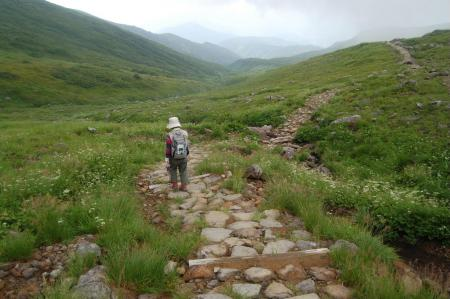 シラネニンジンの登山道