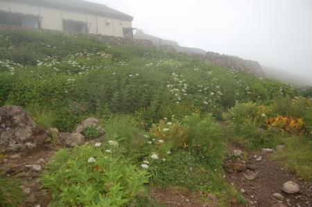 山頂のお花畑