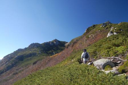 ハイマツの中の登山道