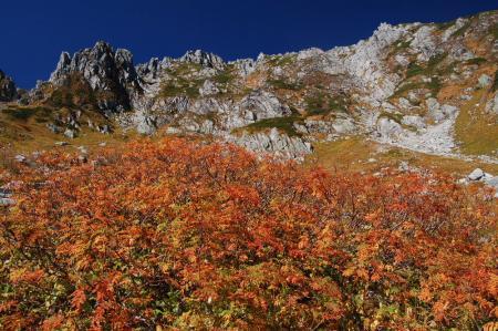 千畳敷の紅葉