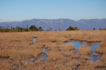 田代山湿原3