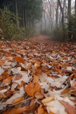 落ち葉の山道