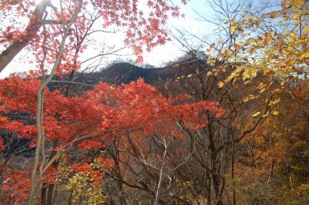 裏縦走路から篭岩山