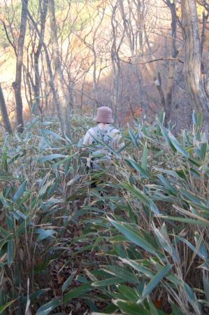 裏縦走路の笹藪