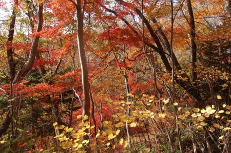 裏縦走路の紅葉