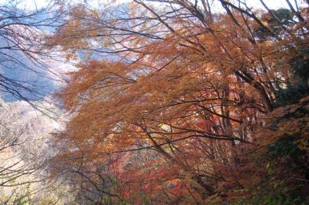 篭岩山頂直下の紅葉