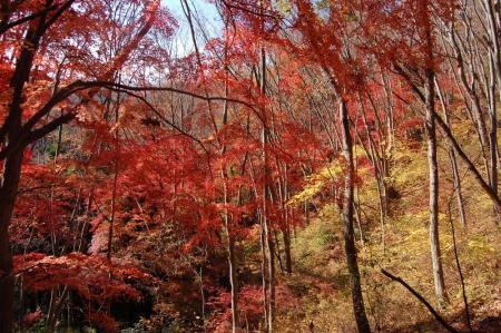 上山ハイキングコース2