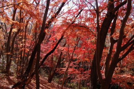 上山ハイキングコース3