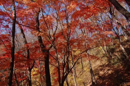 上山ハイキングコース4