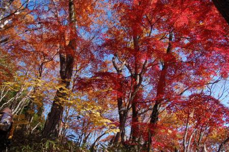上山ハイキングコース5