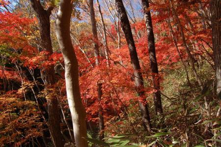 上山ハイキングコース6
