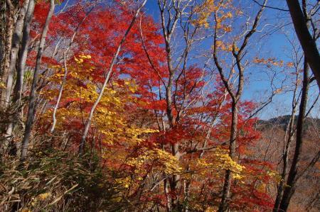 上山ハイキングコース7