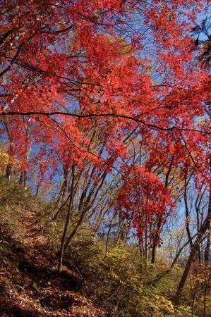 上山ハイキングコース8