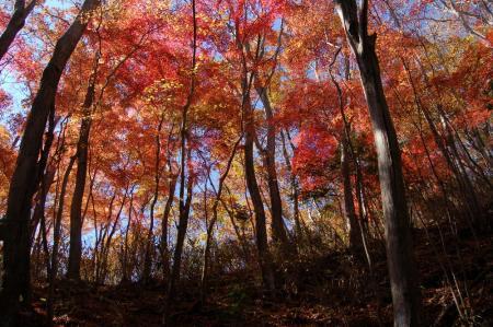 上山ハイキングコース9