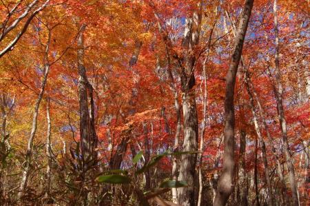 上山ハイキングコース10