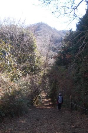 難台山への山道