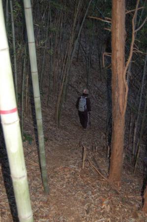 22竹林の中の山道