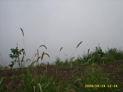 SSA50634.jpg
