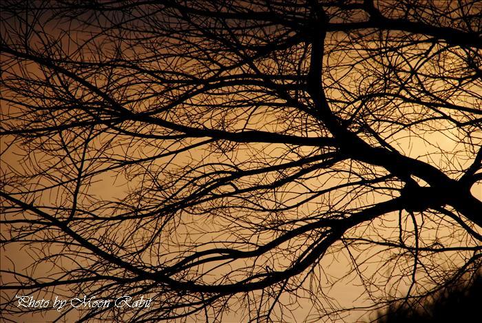 西条市の夕景色 禎瑞乙女川付近の夕暮れ 愛媛県西条市禎瑞下組 2009年3月17日