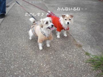みんなで散歩好き~♪