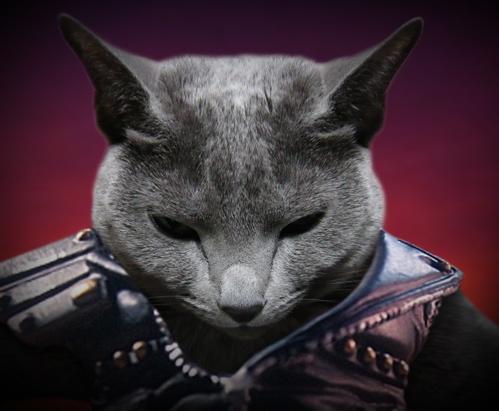 北斗の猫3