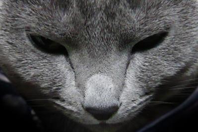 北斗の猫1
