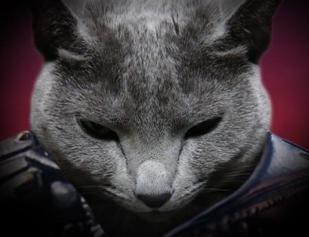 北斗の猫2