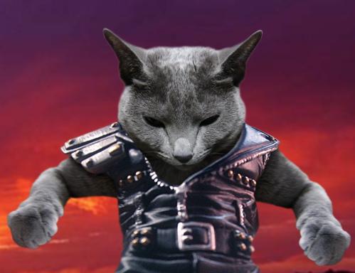 北斗の猫4