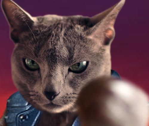 北斗の猫6