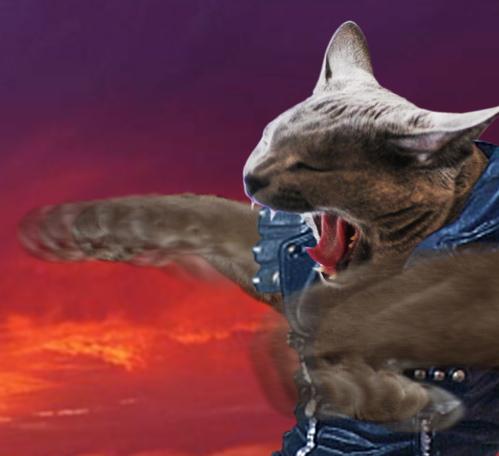 北斗の猫5