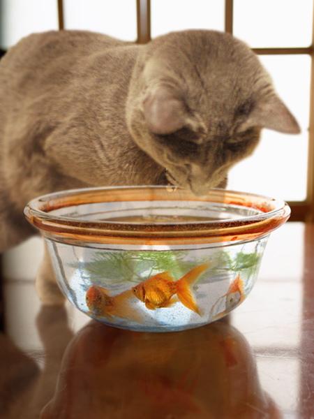 金魚とあかね2