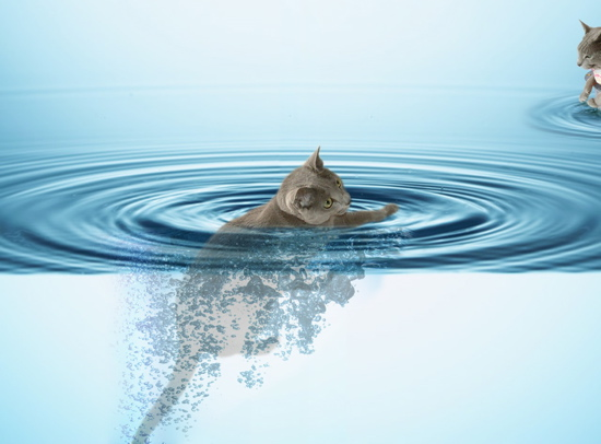 水中みど2