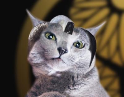 暴れん猫将軍前振り