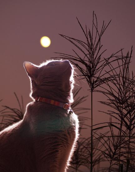 みどりとすすきと月