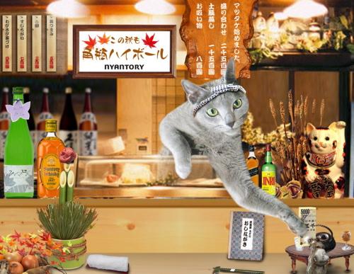 居酒屋みどり秋20