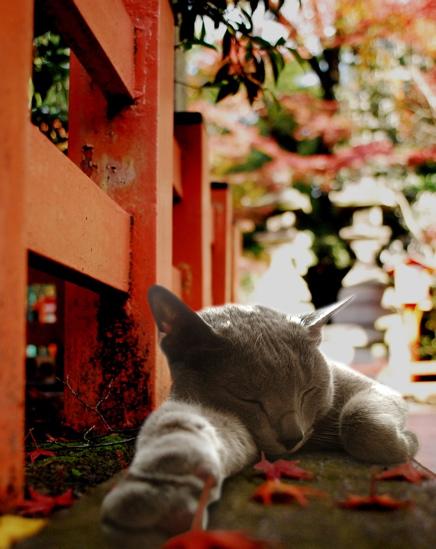 居眠りみどりと紅葉