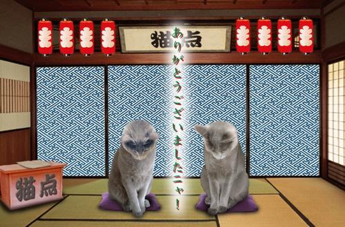 猫点年末挨拶3