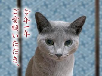 猫点年末挨拶2