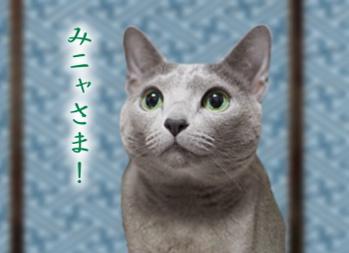 猫点年末挨拶1