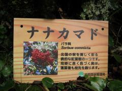 hutagoike100815-102