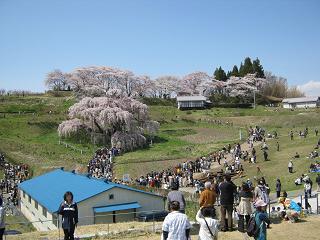 miharutakizakura110424-205