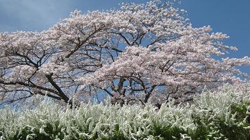minoyama110417-201