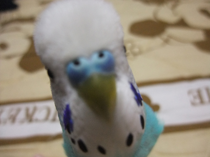 2011 10 19_hck_0019_edited-1