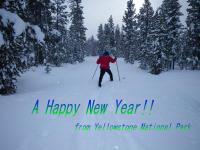 yellowstone new years resolution