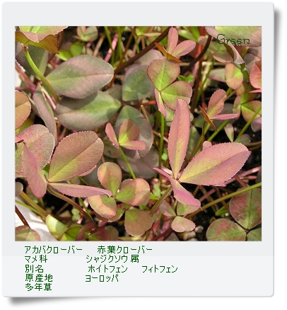 350akabanaclover80531o2a.jpg