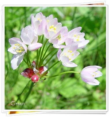 350ariumrozea100531d1.jpg