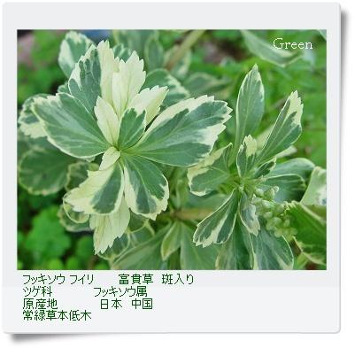 350fukisoufu80702a1.jpg