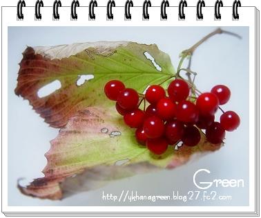 350gamazumi81111e5.jpg