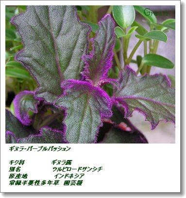 350ginura2c1.jpg